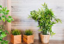 come curare le piante in casa
